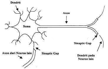 Jaringan saraf tiruan artificial neural network referensi kesehatan struktur sel syaraf biologis ccuart Choice Image