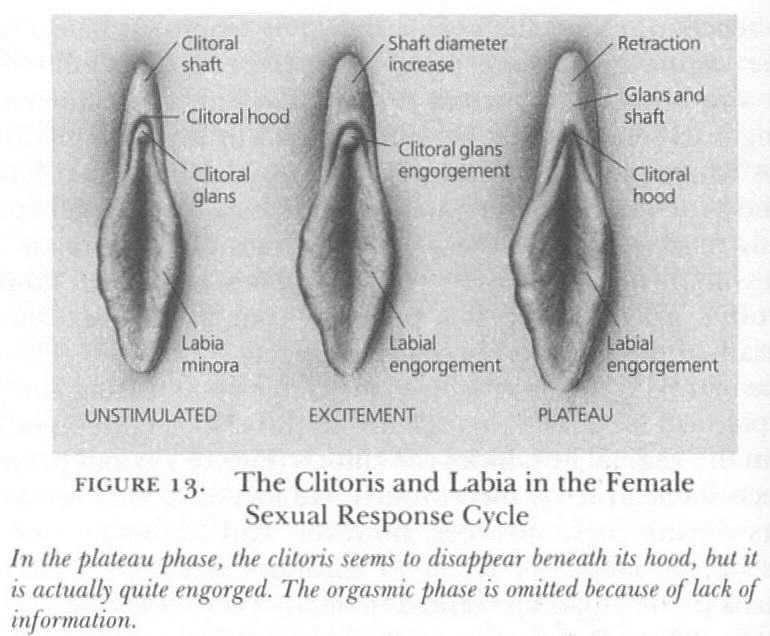 Heat Map Of Where Men Think The Clitoris Is Kerkira Greece Patras