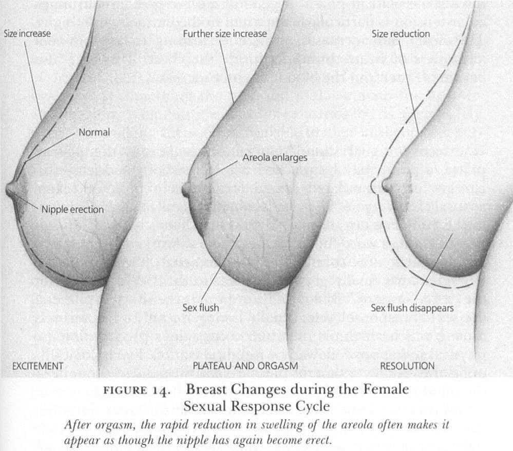 как меняется фигура после первого секса